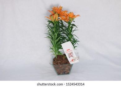 Sao Paulo, SP / Brazil - 09 June, 2018:  Orange lily flower vase with chocolate Raffaello. Raffaello is a spherical coconut-almond confection that Italian manufacturer by Ferrero.
