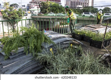 Sao Paulo, SP, Brazil, April 08, 2017. Workers are installing the vertical garden on 23 de Maio Avenue, south of Sao Paulo.