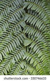 SAO PAULO, SP, BRAZIL - JANUARY 3, 2015 - Vegetable texture fern leaves