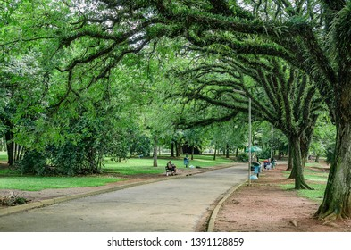 Sao Paulo SP, Brazil - March 02, 2019: Place for walking and relaxing by the open air surrounded by tall trees of the Ibirapuera park.