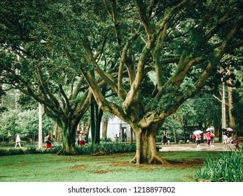 Sao Paulo/SP/Brazil - 01-25-2010: Leafy trees and rain in Ibirapuera Park