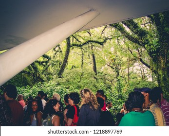 Sao Paulo/SP/Brazil - 01-25-2010: People visiting the forest, with many species, in the Ibirapuera Park