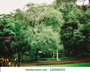 Sao Paulo/SP/Brazil - 01-25-2010: People walking on the paths of Ibirapuera Park on a cloudy afternoon