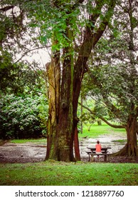 Sao Paulo/SP/Brazil - 01-25-2010: Woman sitting, enjoying the nature in cloudy afternoon, in the Ibirapuera Park
