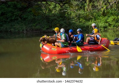 Sao Paulo/SP/Brazil- 05/25/2019: a group of people doing rafting with a dog in a calm river with green background.