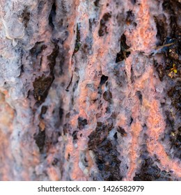 Sap on birch bark in spring .