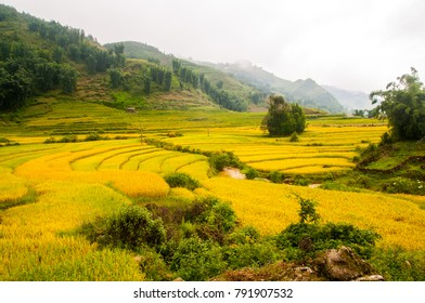 Sapa . Mu Cang Chai . La Pan Tan . Tu Le , Vietnam, terraced rice field landscape near Sapa, north Vietnam.