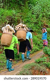 SAPA, VIETNAM - August 10, 2014 : Unidentified Hmong women are carrying corns in traditional basket at catcat village, SAPA, VIETNAM. Hmong is on of the minority ethnic group living in Sapa in Vietnam