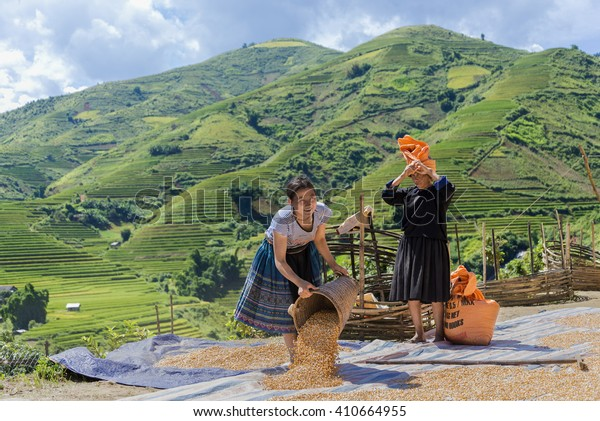 SAPA, VIETNAM, September 11, 2014 : Hmong woman unidentified Vietnamese working maize dried in the sun to preserve for animal feed during the travel HANOI - MU CANG CHAI - SAPA Northwest Vietnam.
