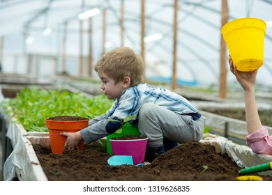 sapling. child planting sapling in soil. growing sapling in greenhouse. small kid take care of sapling. proud of his plants