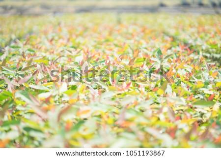 Sapling Eucalyptus Tree Plantation Copy Space Stock Photo Edit Now