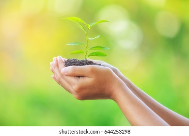Sapling in hand , Plant trees to save the world