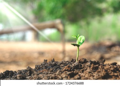 The sapling of plants that grow new on the soil that picks up water to receive light from the sun to grow in the rich nature of agriculture. Earth day save the wold concept.
