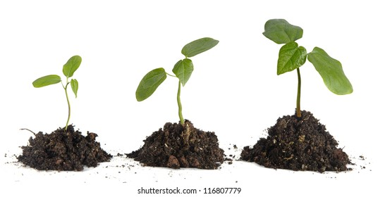 Saplings on white background