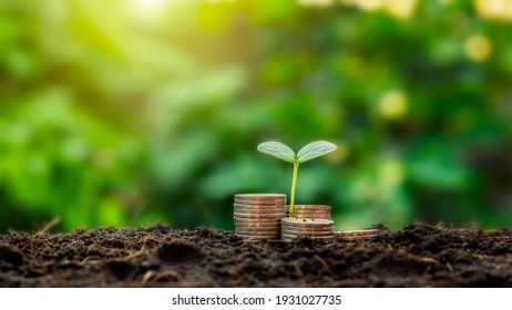 The saplings that grow on the pile of coins include the white light flooding the trees, business ideas, saving money and economic growth.