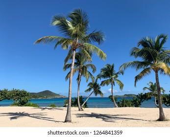 Sapphire beach St. Thomas Virgin Islands