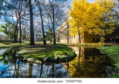 Sapporo, Japan- 13 NOV 2015: Beautiful fall season with golden ginkgo tree at Hokkaido University. The university is also a famous tourism spot especially at autumn season for its amazing autumn view.
