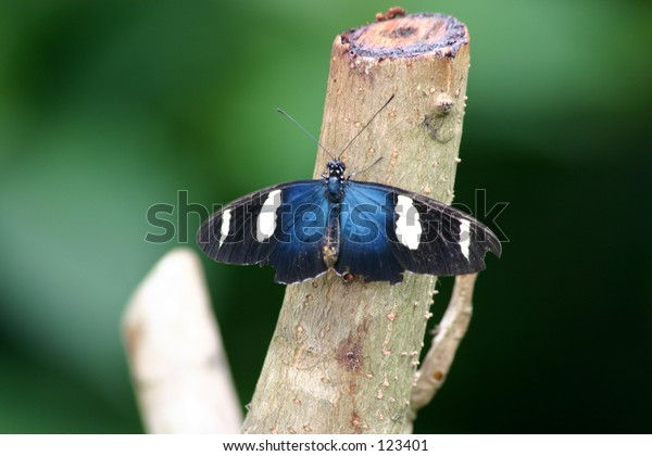 Sara Butterfly on branch