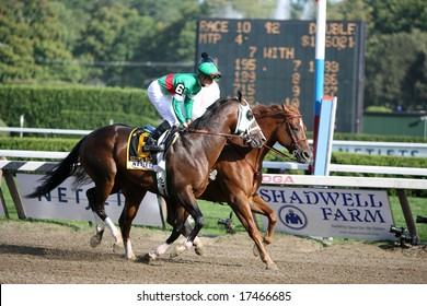 SARATOGA SPRINGS - August 23: Silver Edition with Julian Leparoux Aboard in the Post Parade For The King's Bishop Stakes August 23, 2008 in Saratoga Springs, NY.