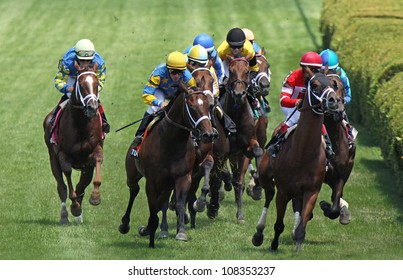 """SARATOGA SPRINGS - JUL 22: Thoroughbreds storm down the turf in a race on Jul 22, 2012 at Saratoga Race Course in Saratoga Springs, NY. Winner is Ramon Dominguez  (blue cap center) and """"Summer Front""""."""
