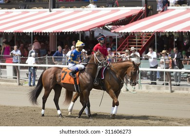 SARATOGA SPRINGS, NY - August 29, 2015: #7 Grand Candy with R Santana, Jr. in  post parade for 4th race on Travers Day at Historic Saratoga Race Course on August 29, 2015 Saratoga Springs, New York