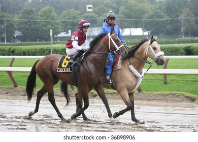 """SARATOGA SPRINGS, NY- AUGUST 29:  """"Florentino (JPN)"""" with Alan Garcia aboard in the post parade for the LURE Stakes at Saratoga Race Track, August 29, 2009 in Saratoga Springs, NY."""
