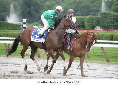 """SARATOGA SPRINGS, NY- AUGUST 29: """"Capt. Candyman Can"""" with javier Castellano aboard in the post parade for the Kings Bishop Stakes at Saratoga Race Track, August 29, 2009 in Saratoga Springs, NY."""