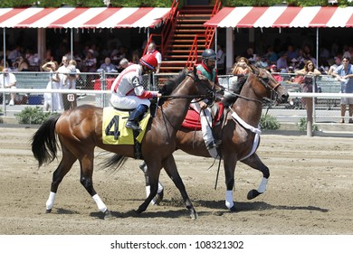 "SARATOGA SPRINGS, NY - JULY 21: ""Spurious Precision"" with Alan Garcia aboard in the Post Parade for the 2nd race on July 21, 2012 Saratoga Springs, New York"