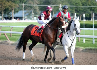 """SARATOGA SPRINGS, NY- SEPT 5: """"Karakorum Fugitive"""" with Jose Lezcano aboard in the post parade for the Peerless Springs Stakes at Saratoga Race Track, September 5, 2009 in Saratoga Springs, NY."""