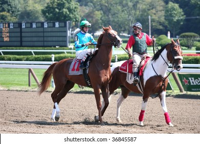 """SARATOGA SPRINGS, NY- SEPT 5: """"Westshore"""" with Robby Albarado aboard in the in the post parade for the 2nd race at Saratoga Race Track, September 5, 2009 in Saratoga Springs, NY."""