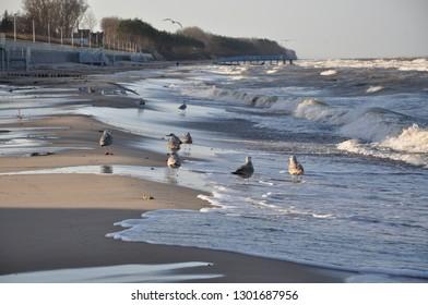 plaża, Sarbinowo, morze bałtyckie - Shutterstock ID 1301687956