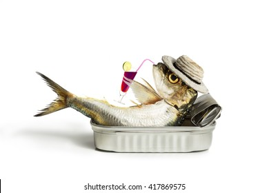 Sardine drinking in the can