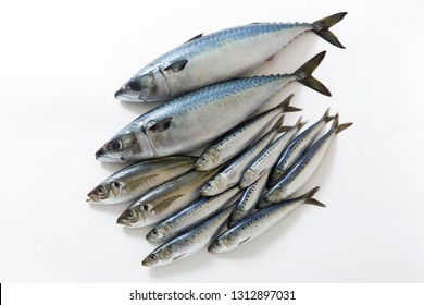 Sardine, mackerel, mackerel, fresh fish