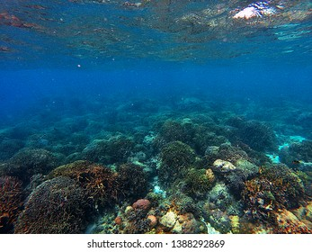 Sardine Run with coral reef in Moalboal, Cebu, Philippines