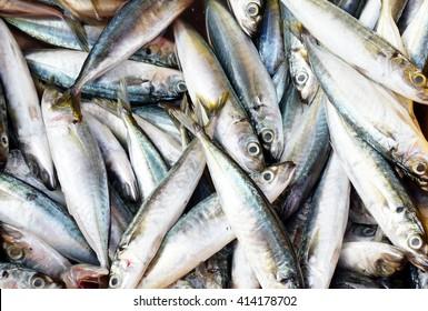 sardines fish background
