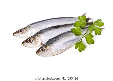 sardines isolated on white background