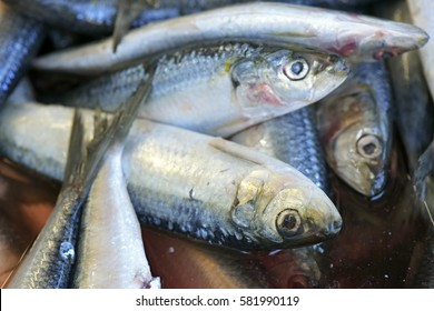 Sardines or pilchards exposed in fish market for sale to the consumer