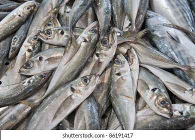 Sardines, or pilchards, a small, oily fish related to herrings, family Clupeidae