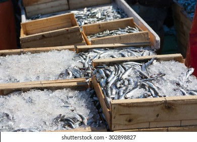 Sardines recently landed at fishing port docks, packed with ice and ready for sale fish market, fish mongers and supermarkets