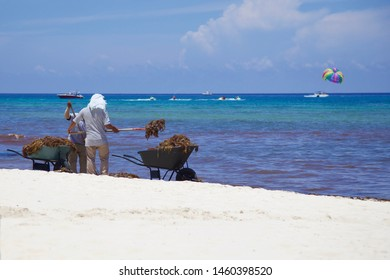 Sargassum Seaweed bloom in Playa Del Carmen Riviera Maya