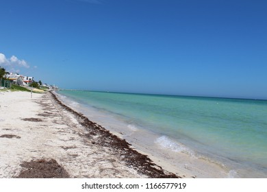 Sargassum seaweed on the beach in Telchac, Yucatan, Mexico- August 24, 2018