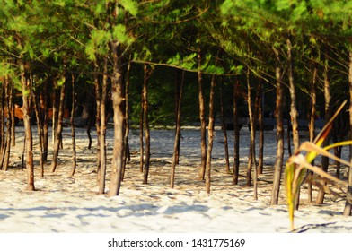 Saronde Island Gorontalo utara, Indonesia. October 25, 2014 Pine trees on Saronde Island. staying here makes you happy and relaxed.