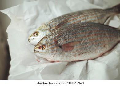 Sarpa salpa fish, sea bottom shelf fish. Salpa became widely known for her psychoactivity when two men ate her and began to have auditory and visual hallucinations. Turin. Italy, 2018.