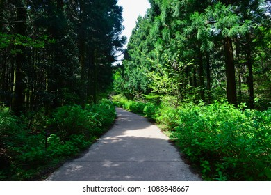 The Saryeoni forest path is located in Jejudo island, which is designated as a  Biosphere Reserve by UNESCO. It is good to follow a trail because of fresh air and restful for one's eyes.