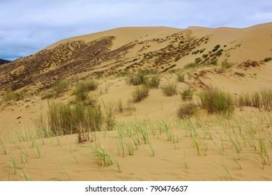 Sarykum sand dune in Dagestan Nature Reserve, Russia.