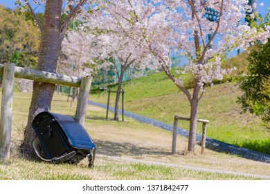 satchel and cherry blossom