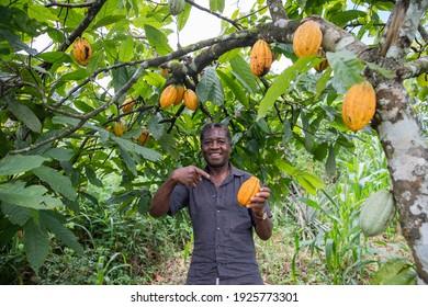 A satisfied farmer on his cocoa plantation.