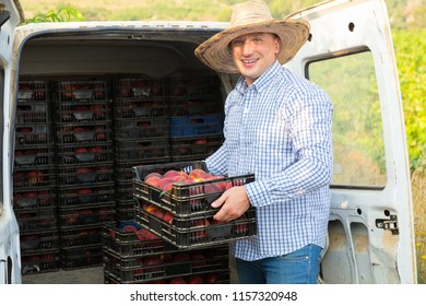Satisfied pleasant smiling man  professional horticulturist packing crates  with tasty peaches to car