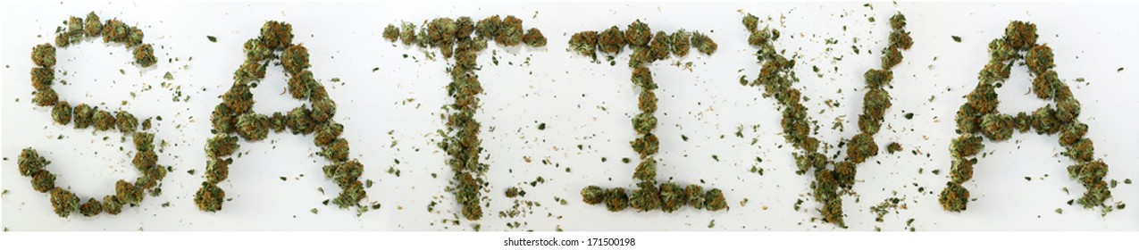 "Sativa Spelled With Marijuana. The word ""Sativa"" spelled out with real marijuana."