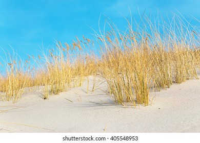 Saturated dry yellow grass on the sandy beach at wonderful sunny day